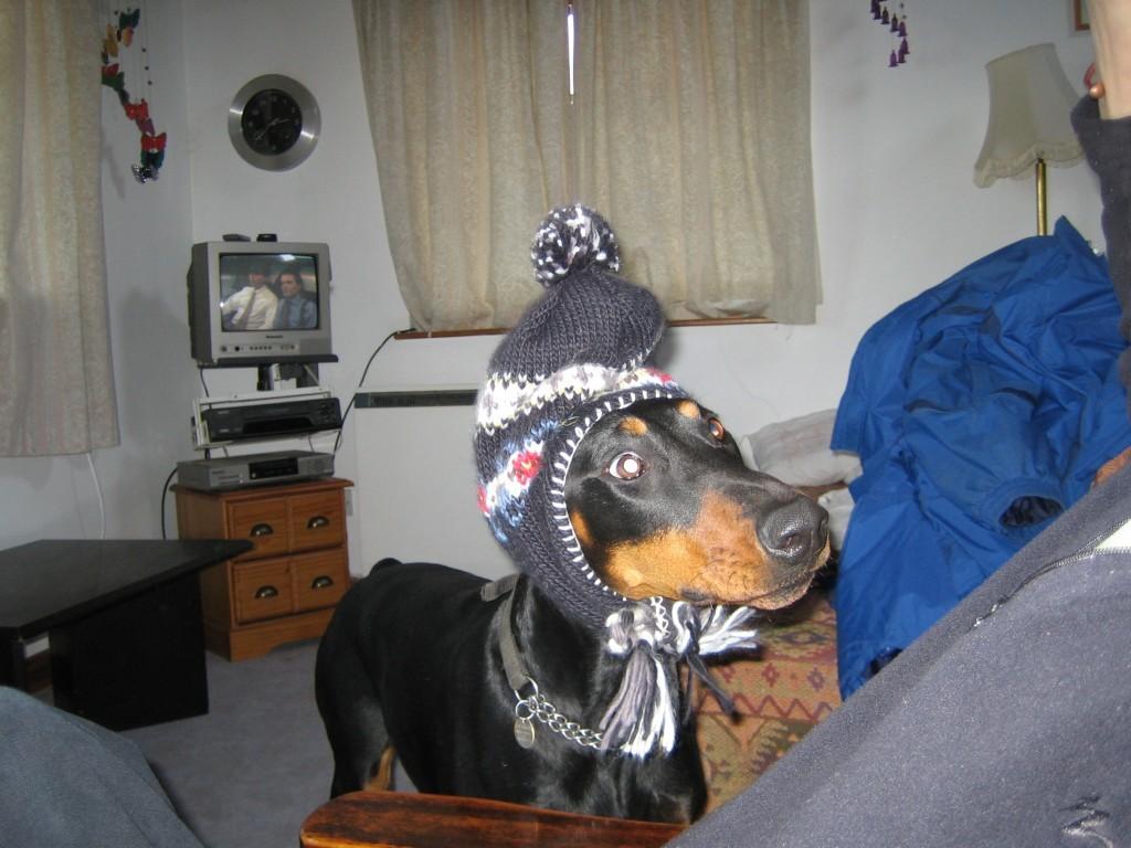 Dog at Poppit Sands